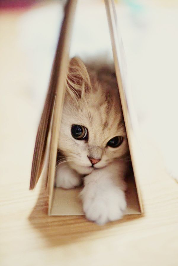 cat hiding in books photos of cat trying to hide