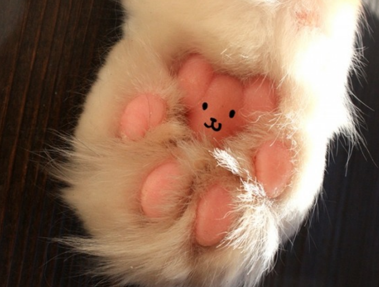 teddy bear in cats paw
